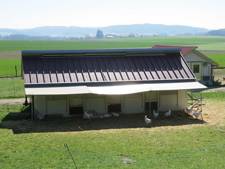 慕尼黑郊區以有機方式飼養的雞農場(攝影/張正揚)