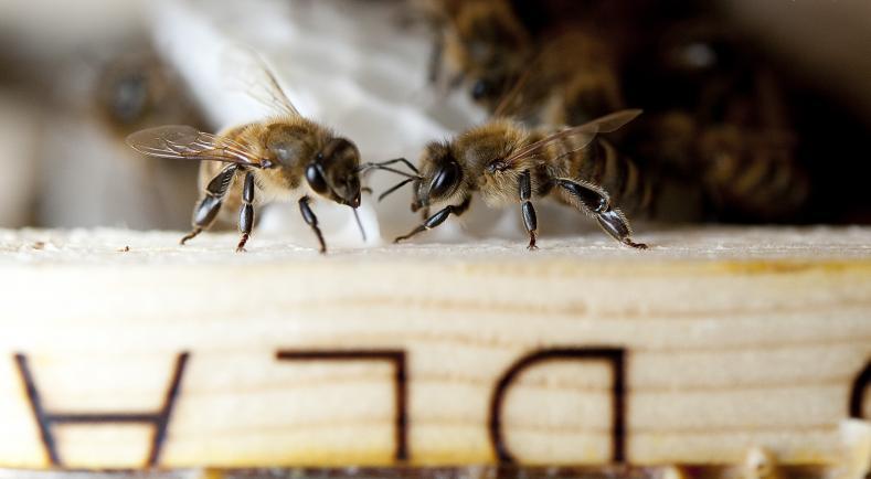 法國禁用類尼古丁農藥,積極推廣蜜蜂養殖(圖片來源/法國農業部)