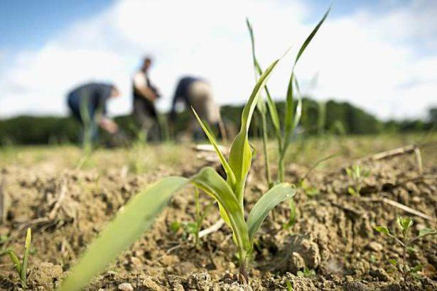 郭華仁/法國訂「生態農業」為國家主軸│2025年農藥減半 20萬農家採用生態農法
