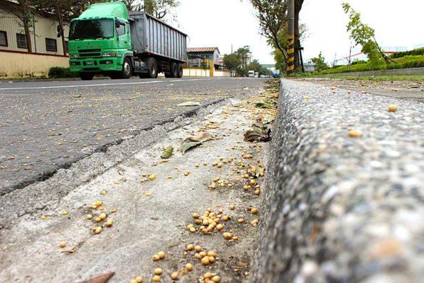 傾卸車來往的路旁散落基改黃豆(攝影/蔡佳珊)