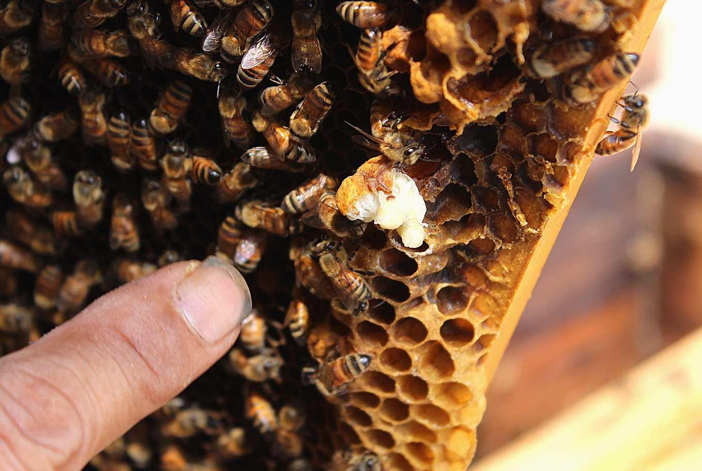 幼蟲上紅點為蜂蟹蟎,肉眼可見(攝影/賴郁薇)
