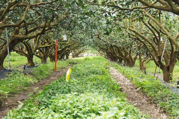 在果園鋪上原生野花草毯~結果讓農人好意外