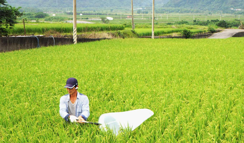 農友可於水稻結穗後進行掃網,每兩週一次,每期掃網三次即可,用來自我觀察及監測