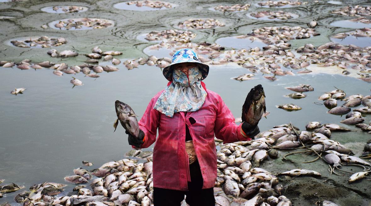 2016年寒害重創養殖漁業(攝影/潘子祺)