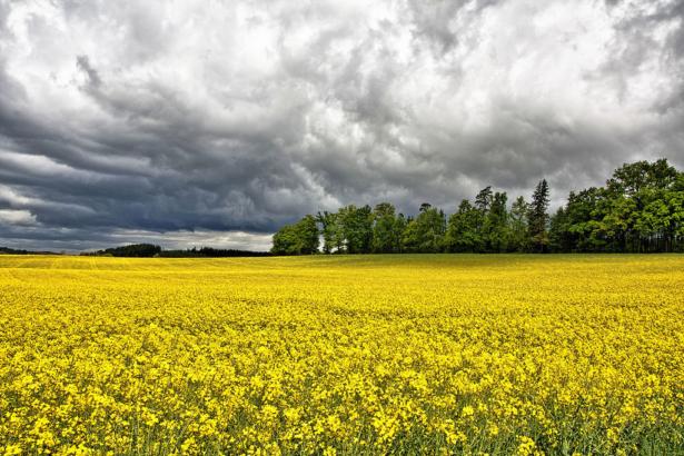 全球物聯網時代,農業走向智慧│如何跨領域專業「打群架」?
