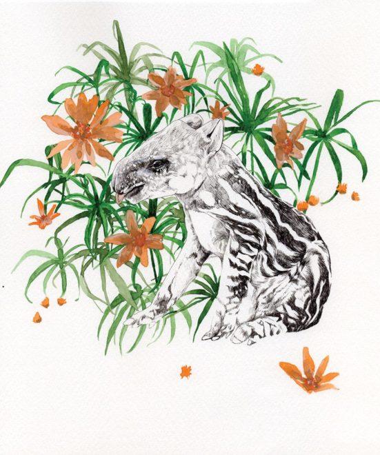 Mountain tapir-高山貘/創作者:ty.HSU