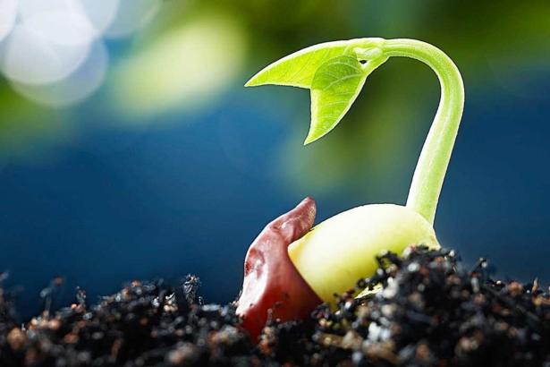 「農業基因體」應用全球瘋 台灣育種單位分散 商業模式模糊 如何突破?