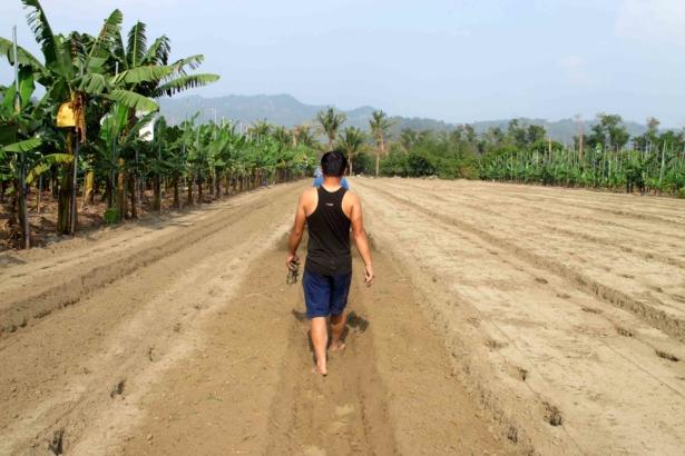 【公民寫手】台灣農業貪婪的遊戲規則,產出香蕉消費的賭徒與困境