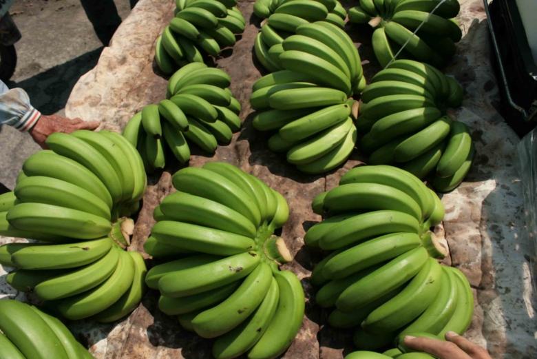 這個賣香蕉的遊戲,讓農民變成賭徒、盤商變成投機客、政客變成施捨者,台灣的香蕉未來在哪呢?