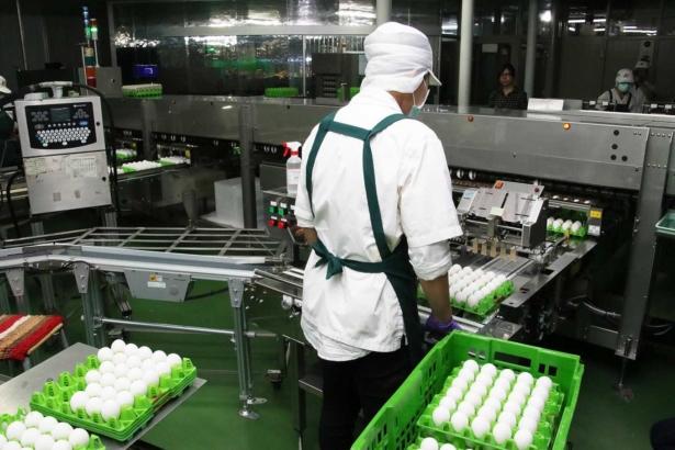 擺脫用藥亂象,蛋雞業全體再教育│雞舍管理大改變,全面力推洗選蛋