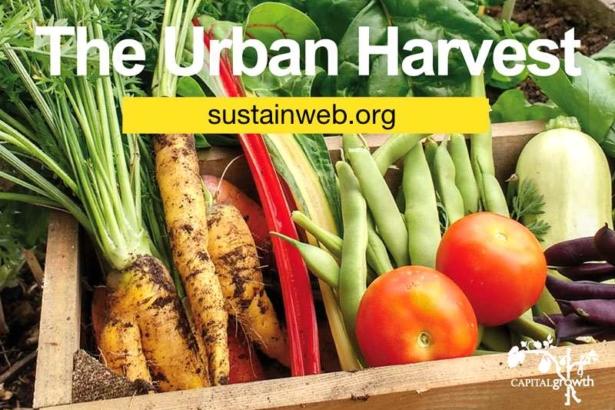 當城市長出兩千多座農田│倫敦公私部門協力,打造永續飲食城市