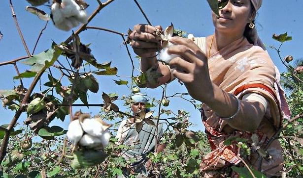 【公民寫手】【進階篇|人工智慧x農業】如何運用人工智慧預測棉花葉面積