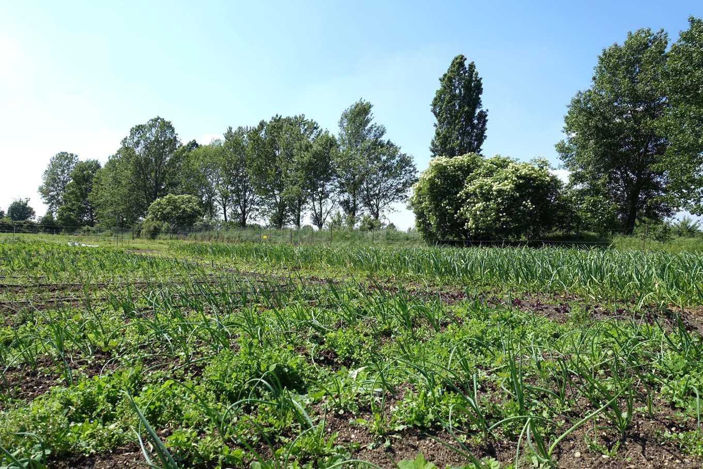 有機菜圃外,卡蓓雅種了上萬棵樹木(攝影/鄭傑憶)