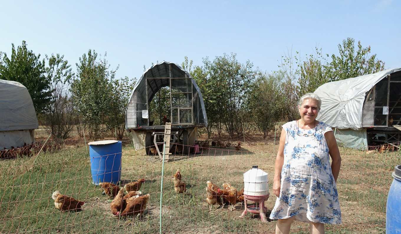 卡蓓雅堅持聘請屠夫到農場宰殺,陪雞走完最後一哩路(攝影/鄭傑憶)