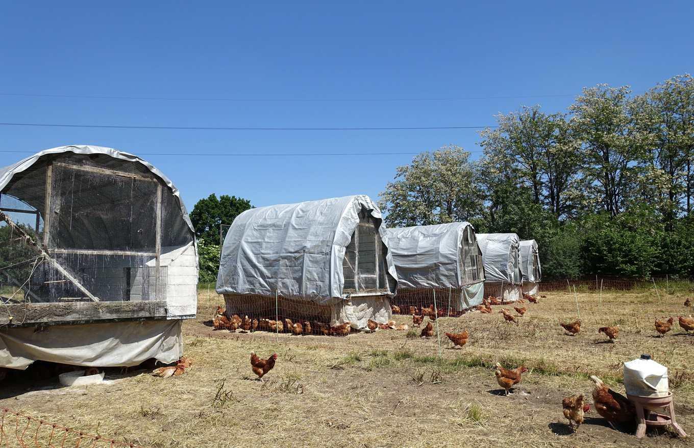 卡蓓雅每兩個月清理一次雞舍,對抗躲在縫隙的雞蟎(攝影/鄭傑憶)