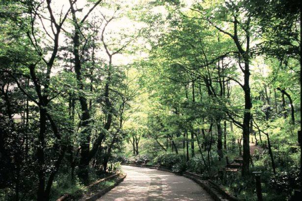 在集合住宅中心長出巨大森林,東京都市里山│《走讀日本森川里海》書摘