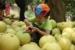 【裡山塾】護石虎的大白柚來囉!來參加里山柑橘香吧~