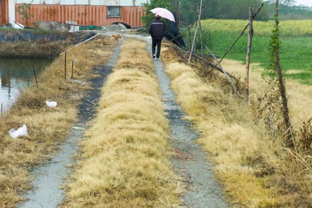 按照規定路邊不得使用除草劑(攝影/張良一)