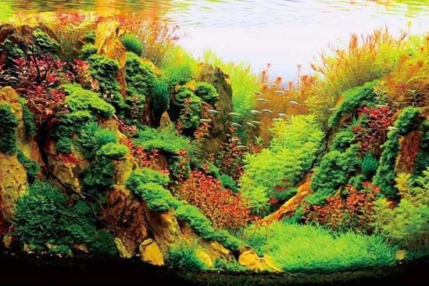 全球觀賞水族產值150億美金,台灣綠金明星水草卻日漸凋零,如何重返榮耀?