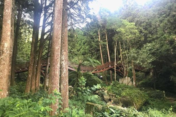 台大實驗林,橋是由實驗林木材做成(攝影/洪志遠)