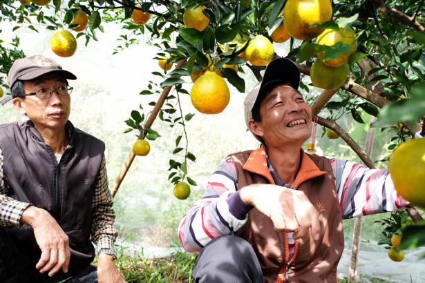 橘子甜不甜?友情最甜!「五酷山農團」結義,農友學者股東相挺串連