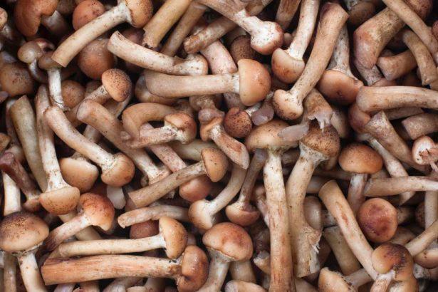 法規鬆綁,鼓勵農業廢棄物轉能源燃料,禽畜糞尿與果菜殘渣共發酵