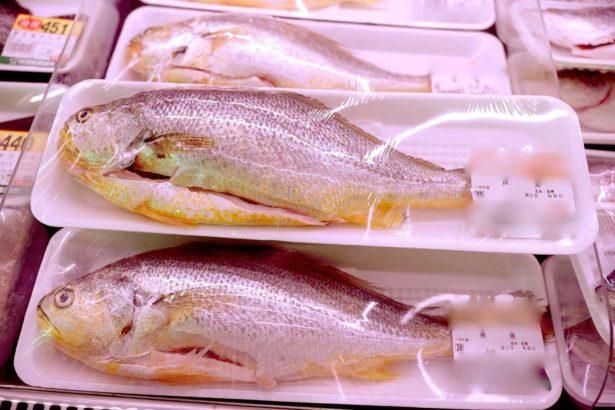年節黃魚需求大增,是否能確保食安(圖片中非當事黃魚,攝影/蔡佳珊)