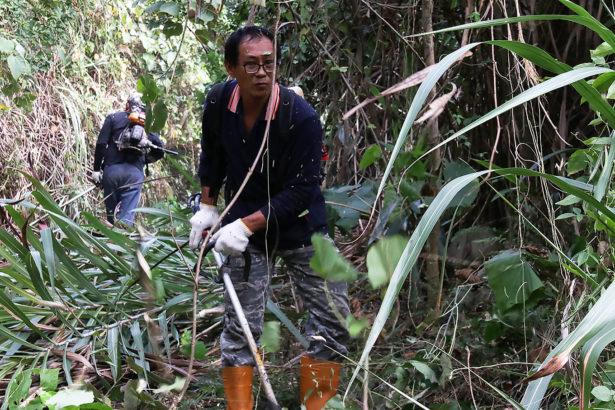 【系列專題】萌芽中的林下經濟:前景與難題