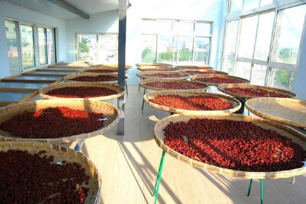 紅棗乾燥(小型農產加工者陳淑慧提供