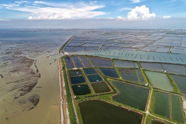 遠處為水試所的實驗區域(攝影/許震唐)