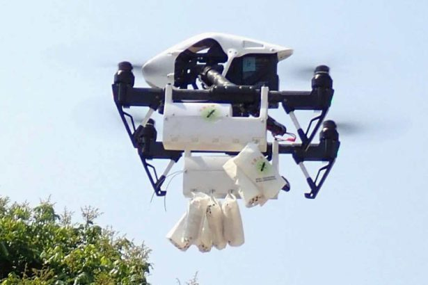 平腹小蜂大軍出動,陸空合擊荔枝椿象!減農藥奏效,蜜蜂今年安全過關
