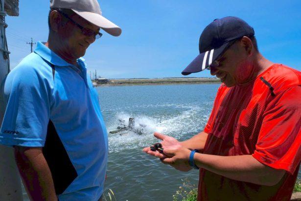 水試所周昱翰(右)與養殖戶林益州(左)討論文蛤試驗效果(攝影/蔡佳珊)
