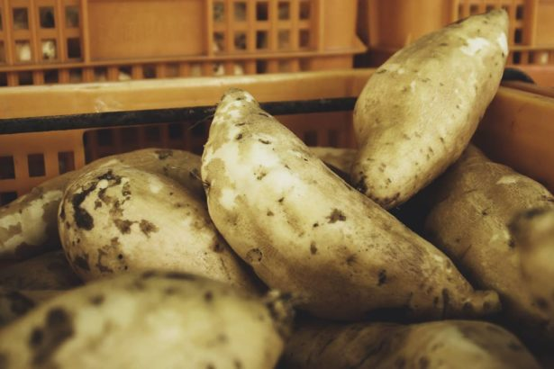 【公民寫手】產地到餐桌:番薯的產銷過程