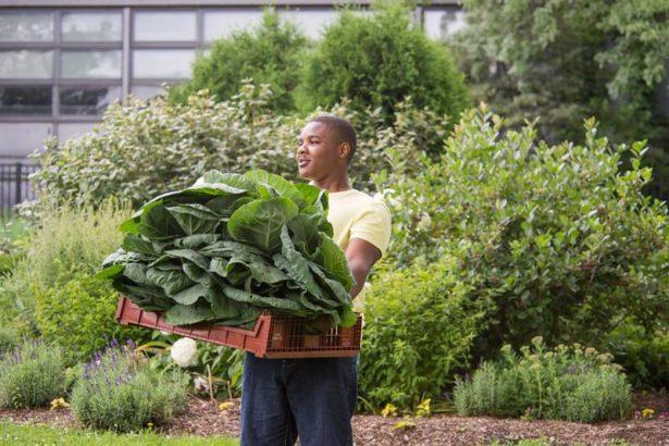 植物園就是農業創業基地!芝加哥風城豐收計畫,幫助城市青年從農