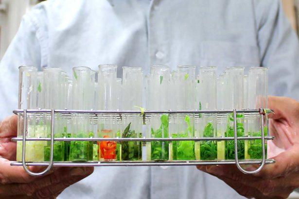 【獨家】農試所千萬技轉涉違約 「生化法」農藥快篩技術 驚傳早外流中國