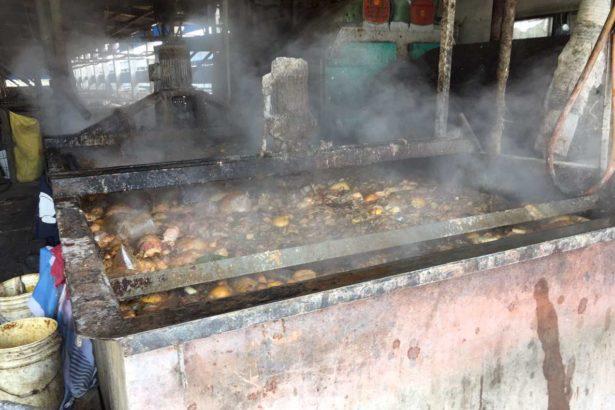屏東縣的廚餘過去有九成都仰賴養豬場消化。(照片提供/屏東縣環保局)