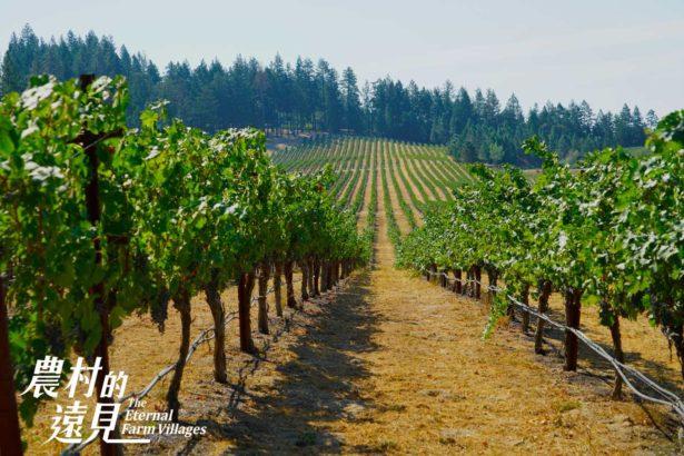 透過專法讓農地不能分割買賣,僅能農用(圖片來源/公視)