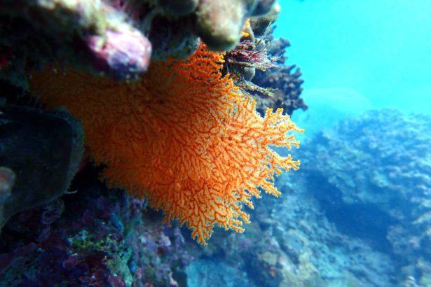 基翬海底珊瑚礁_台灣環境資訊協會提供_蕭伊真攝