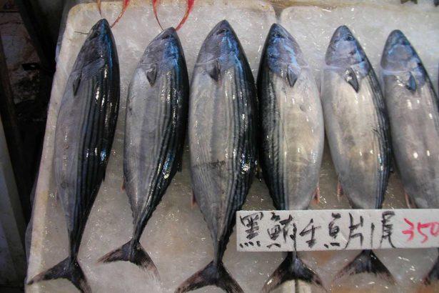 台灣假冒黑鮪魚的齒鰆跟巴鰹