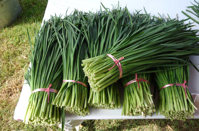 農曆二月吃韭菜最得時,白頭韭菜嫩,青頭韭菜辛辣夠味| 上下游News&Market