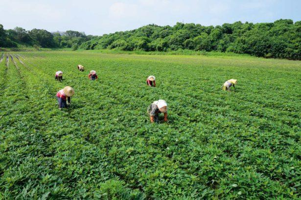 瓜瓜園與六百多位農民契作,保證收購,依品質定價(攝影/蔡佳珊)
