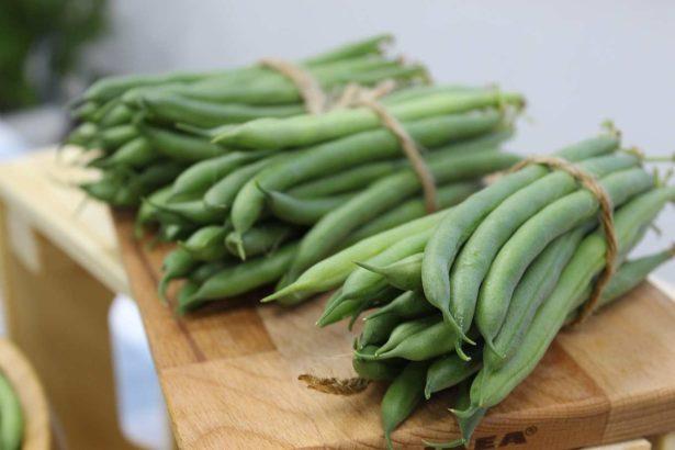 矮性菜豆志氣高,追隨毛豆成銷日新星,栽培切記「冷涼卡好」