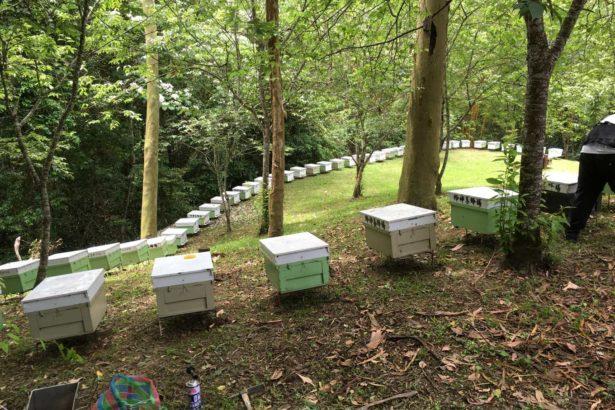 林下養蜂-何政坤攝