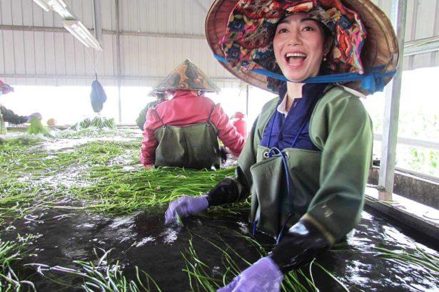 國內農業缺工嚴重,仰賴不少東南亞移工協助(攝影/李慧宜)