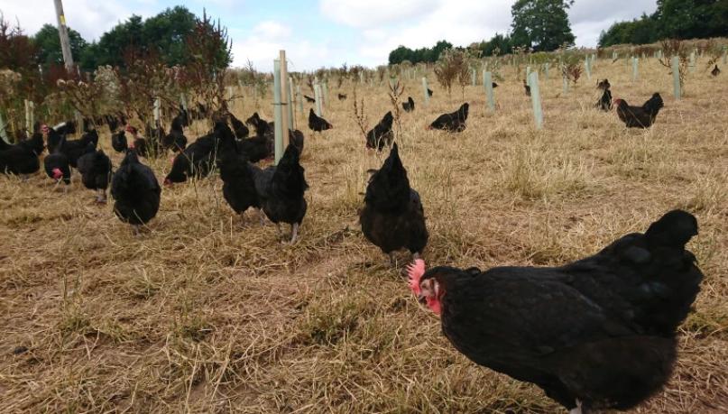 走地雞蛋農場