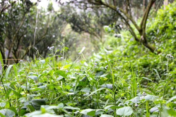 陳興宗/跳脫巴拉刈之爭,土壤肥料六大心法,幫你管控雜草