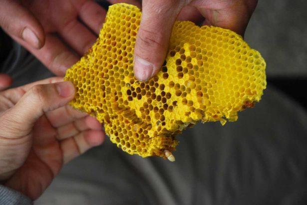 【演講活動】徐仲/什麼才是好蜂蜜?品嚐五種風土蜜,一探台灣蜂蜜風土學
