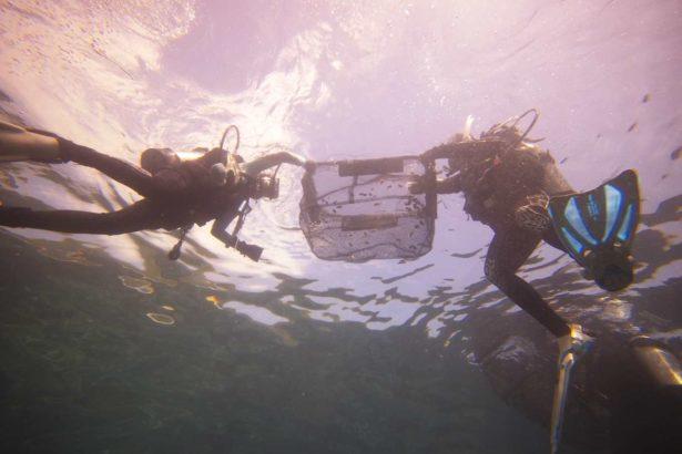 在復育期間禁止捕撈,豐富海洋生物資源,圖為潛水志工將一籃籃的花枝苗送回大海_新北市政府漁業暨漁港管理處提供