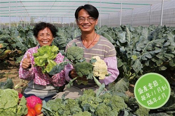 【公民寫手】上自然農場─用歡喜心種青花菜