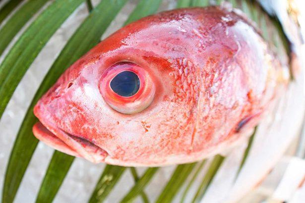 緊張的魚不好吃!首屆「水生動福」研討會:讓魚善終,食物更美味